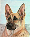 Hawk the German Shepard - Ballpoint pen artwork by Vincent Whitehead