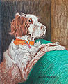 Memorial study of Lady the Hunting Dog - Ballpoint pen artwork by Vincent Whitehead