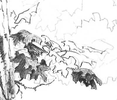 DRAWING TREE FOLIAGE part 2 - BALLPOINT PEN DRAWING TUTORIALS at