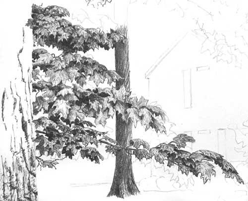 DRAWING TREE FOLIAGE part 3 - BALLPOINT PEN DRAWING TUTORIALS at